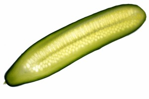 cool-as-a-cucumber