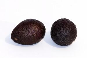 hass-avocado-white-background